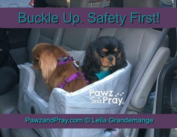 car pet safety