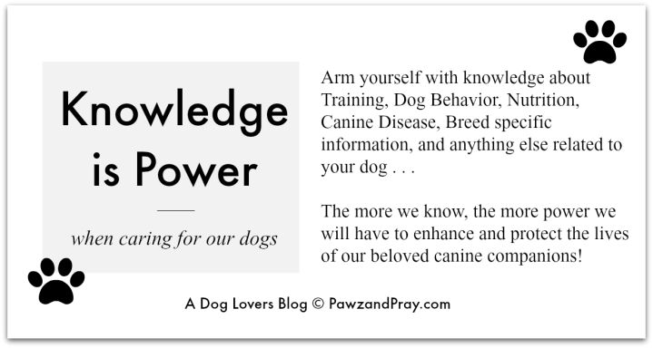 canine influenza article