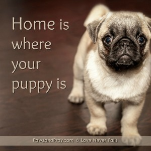 Home is where your puppy is
