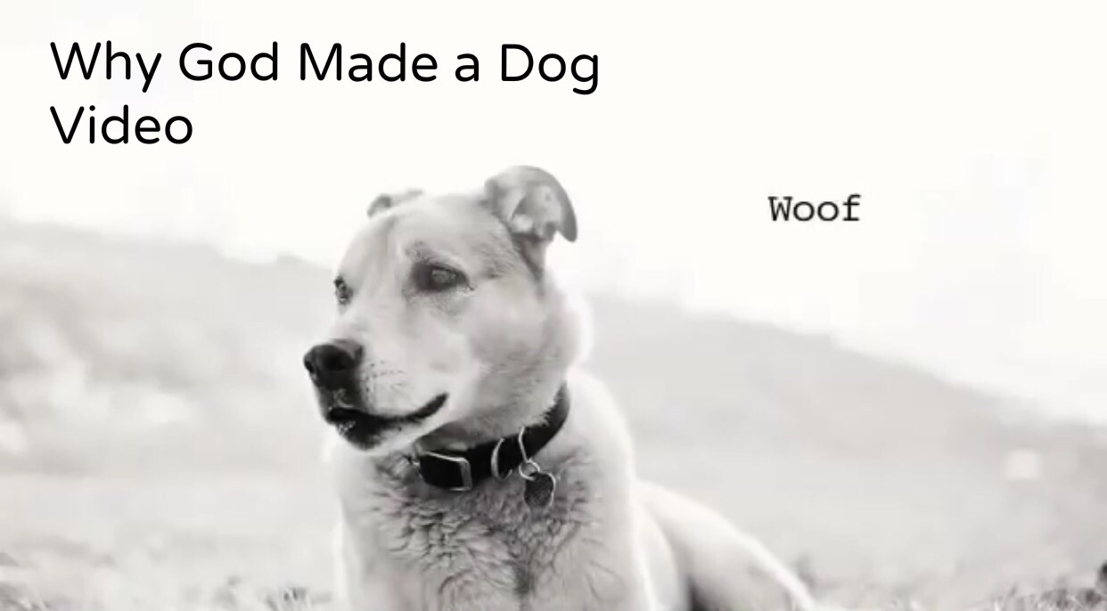 god made a dog video