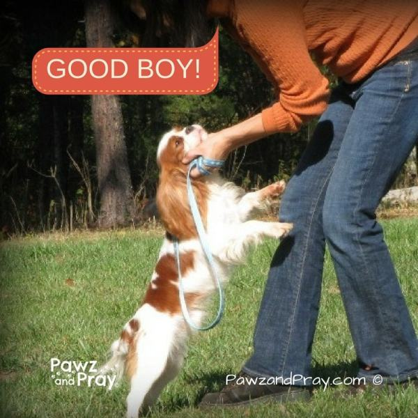 Positive reinforcement training