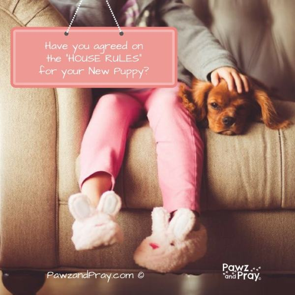 puppy house rules