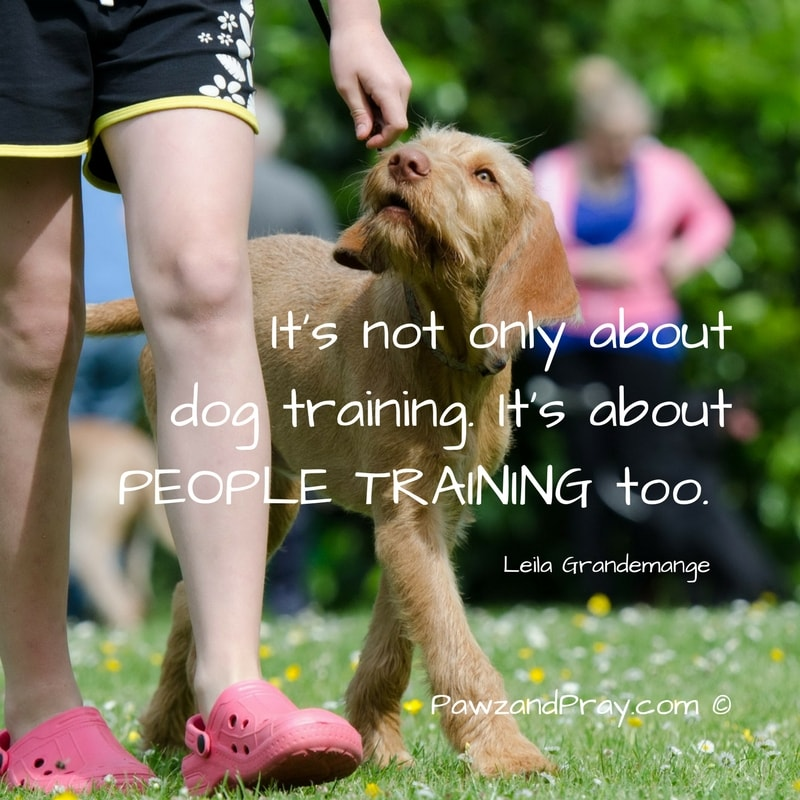 It's Not Only About Dog Training [dog quote]