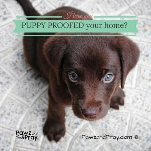 Have you puppy proofed your home?