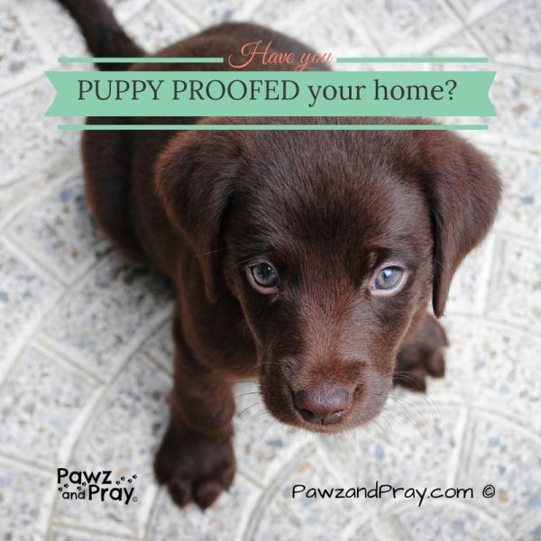 puppy proof home