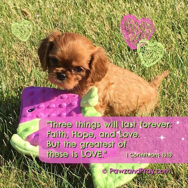 Puppy with Bible Verse image