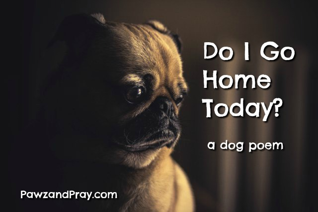 Do I Go Home Today Dog Poem