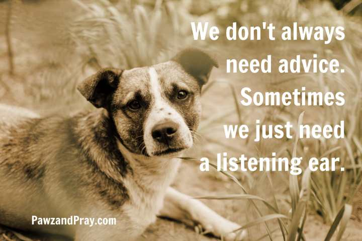 dog quote. We don't always need advice