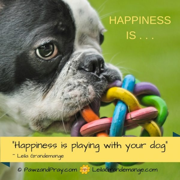Happiness is Playing With Your Dog [dog quote] – Pawz & Pray