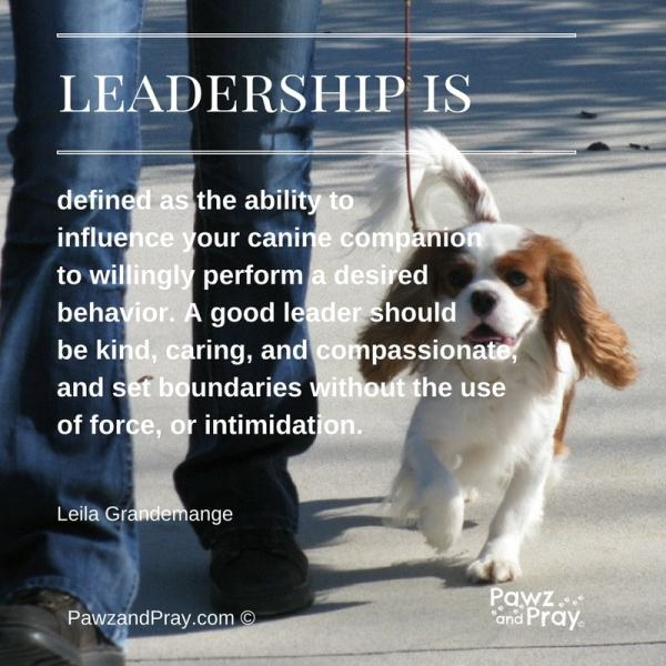 leadership is, dog training
