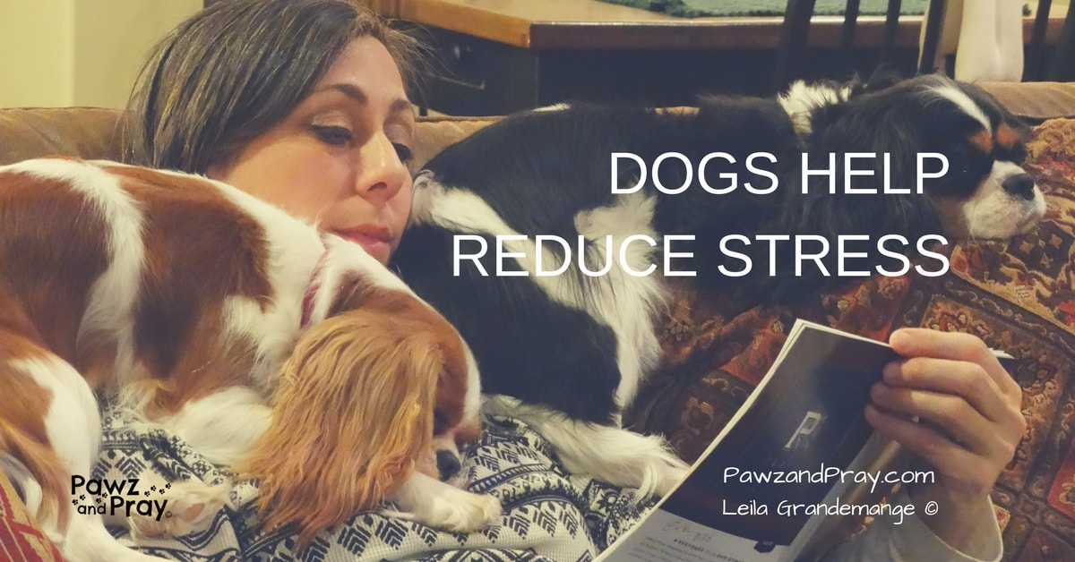 Fun Facts About our Furry Friends #3 [Dogs Reduce Stress]