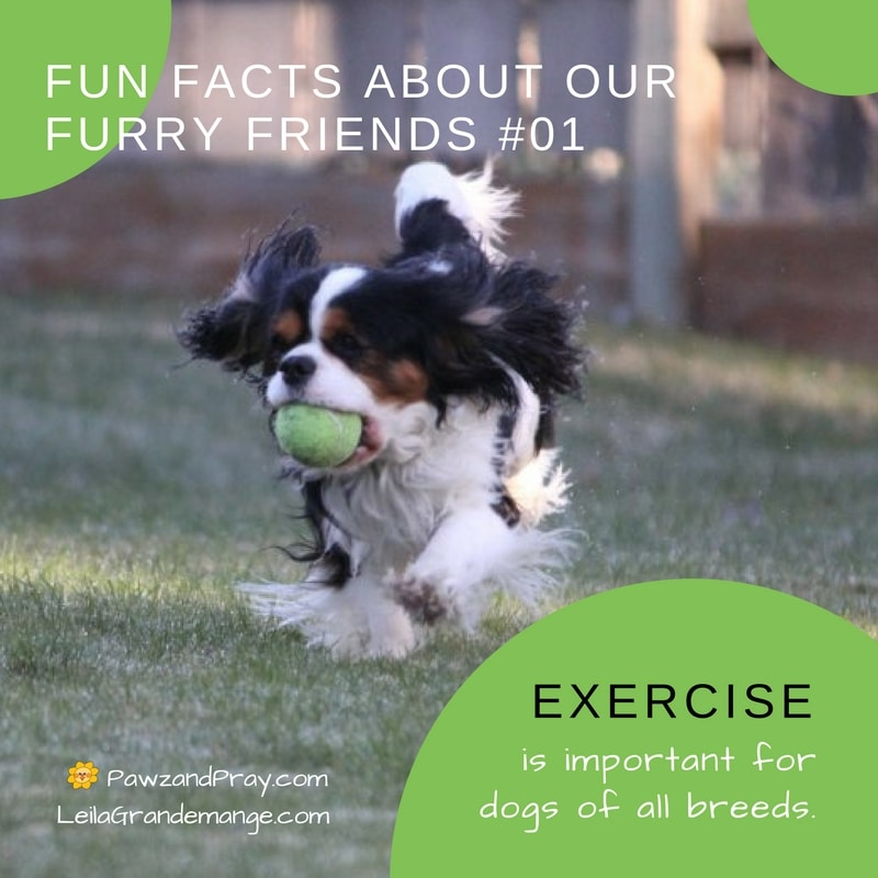 Fun Facts About our Furry Friends [dog fact #1]