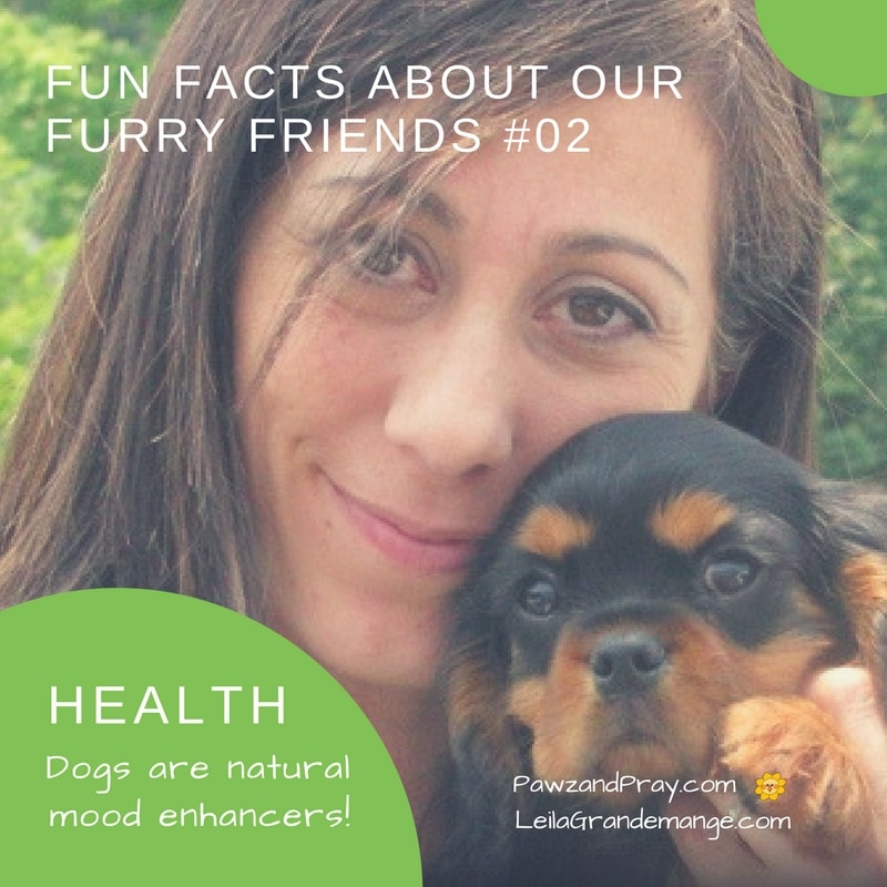 Fun Facts About Our Furry Friends [dog fact #2]
