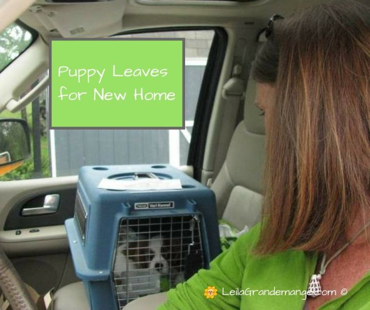 new puppy leaving for home