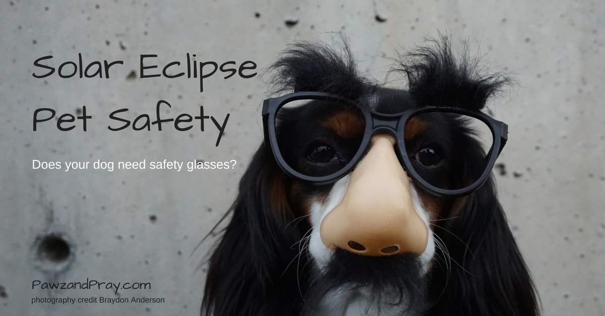 Solar Eclipse Pet Safety