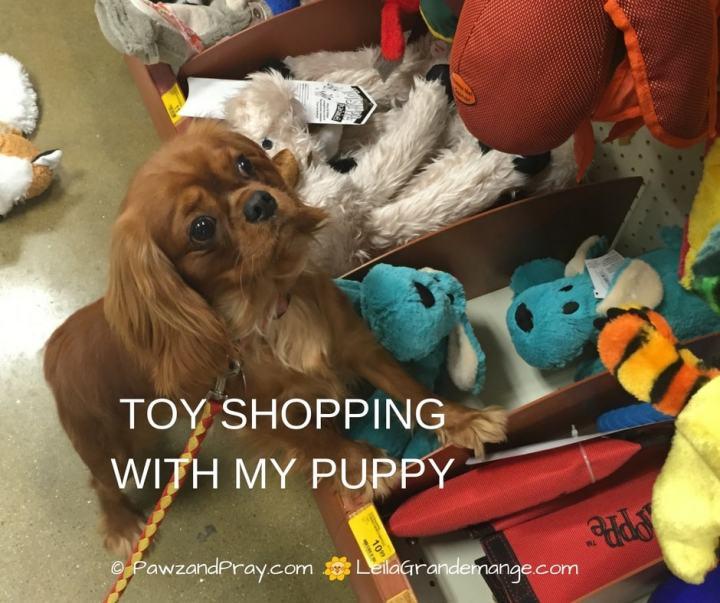 dog chew toys