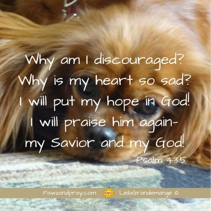 Why is my heart discouraged?