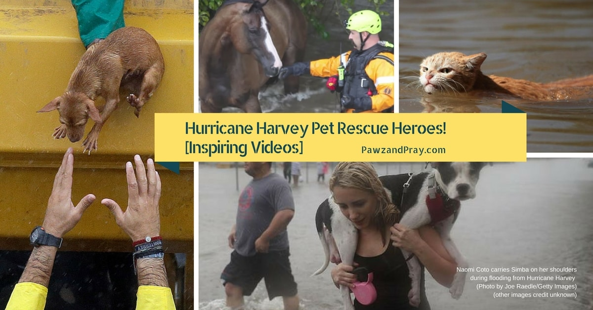 They Weren't Going to Leave Their Pets Behind [Hurricane Harvey Inspiring Rescue Videos]
