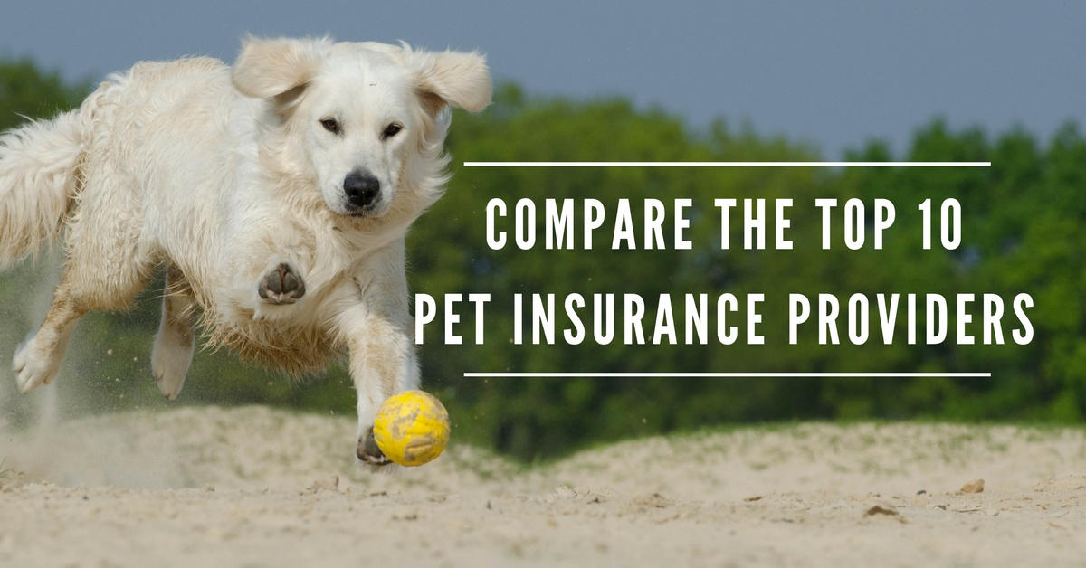 Which Pet Insurance is Best? [Compare the Top 10 Pet Insurance Providers]