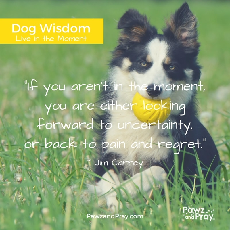 Live in the Moment [Dog Wisdom #1]