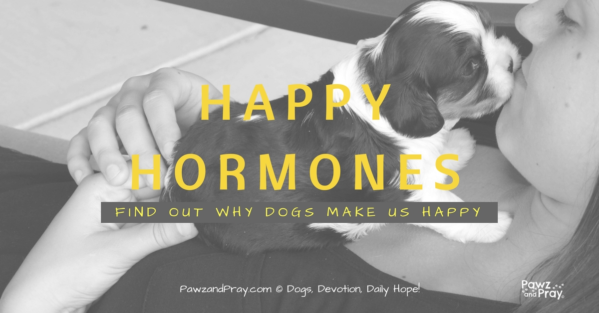 Happy Hormones [Find Out Why Dogs Make Us Happy]