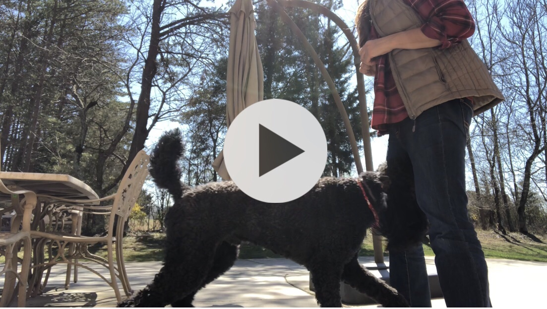"Video of my Poodle Learning ""Through"" [47 seconds]"
