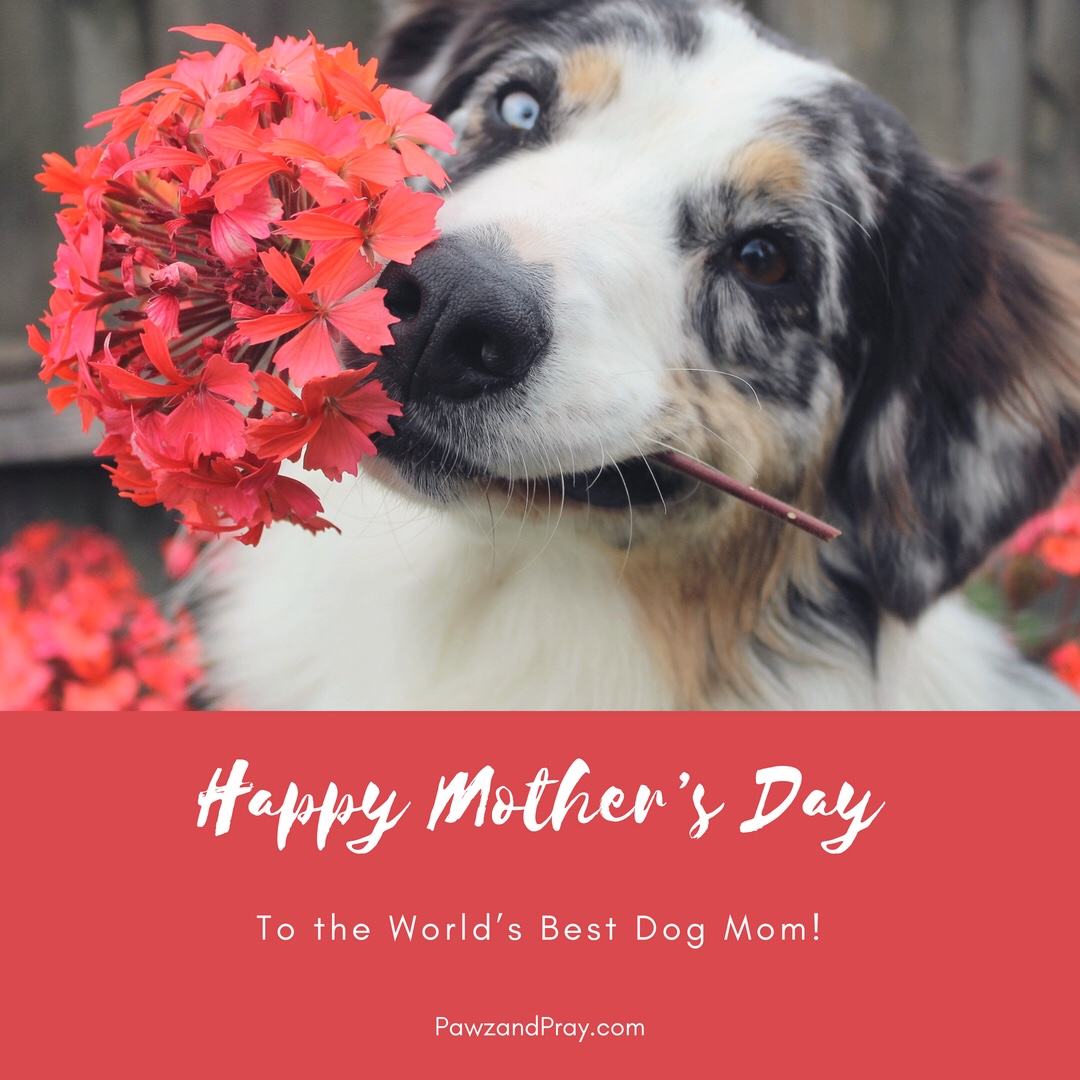 Happy Dog Mom Day!