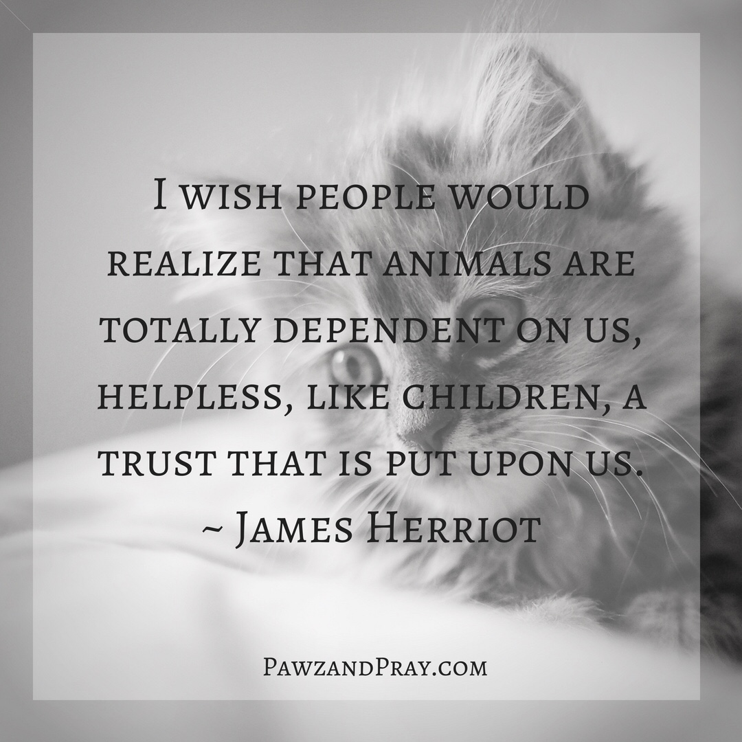 I Wish People Would Realize [Quote]