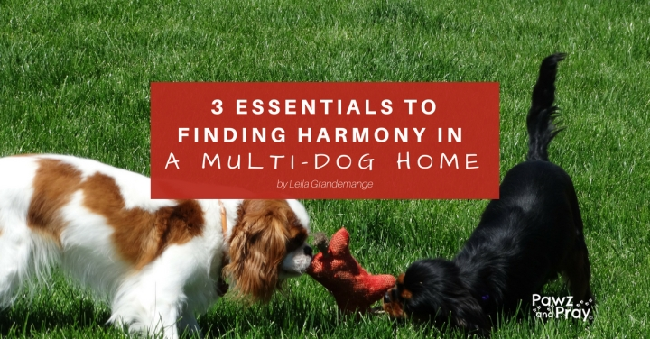 Inspirational article: 3 essentials to finding harmony in a multi-dog home