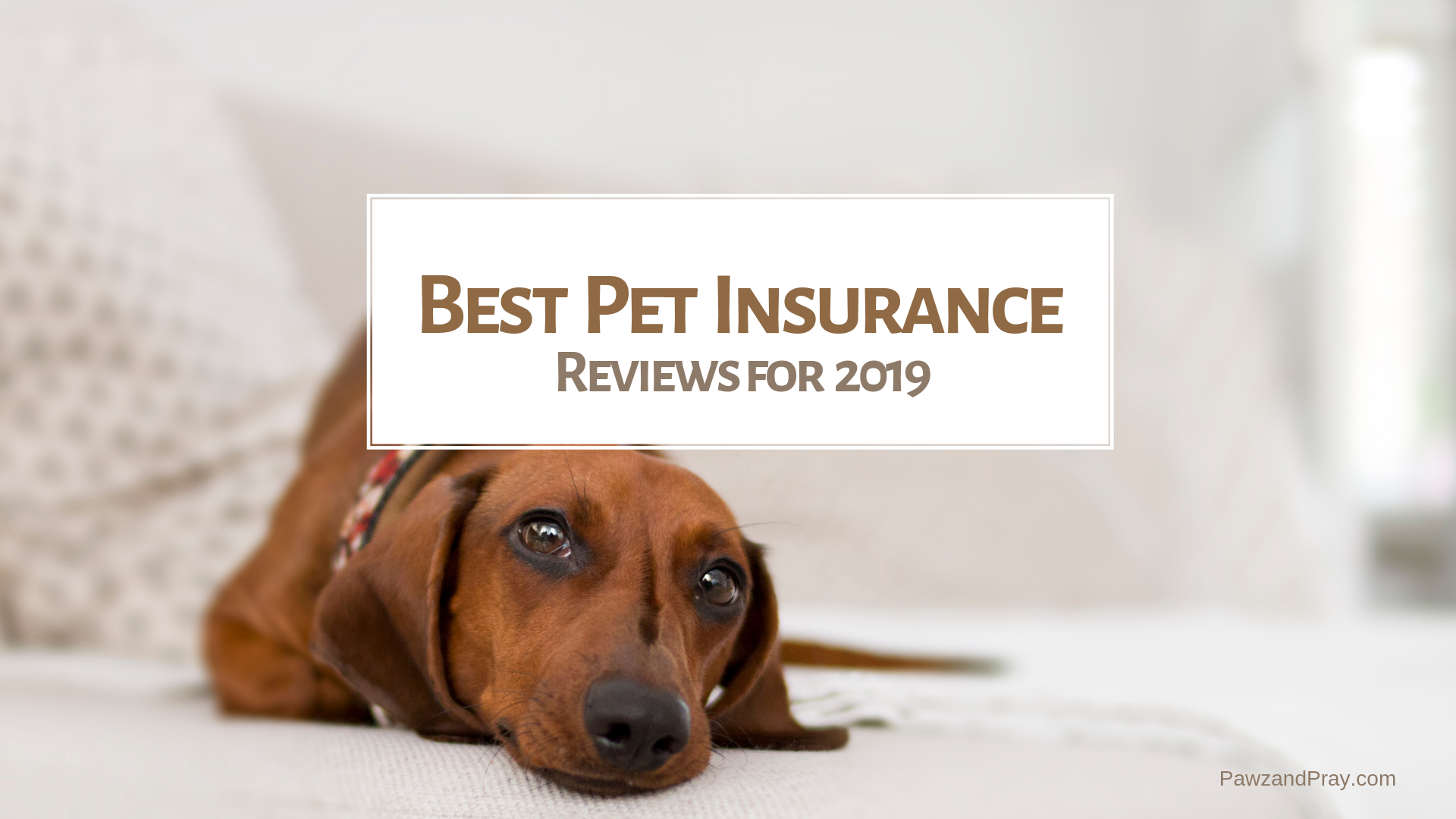 Best Pet Insurance Reviews 2019