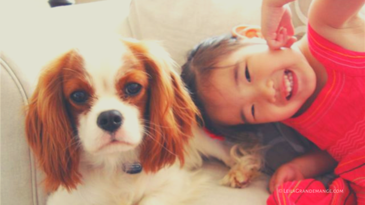 How to Help Children Learn responsible Dog Ownership [Books and Resources]