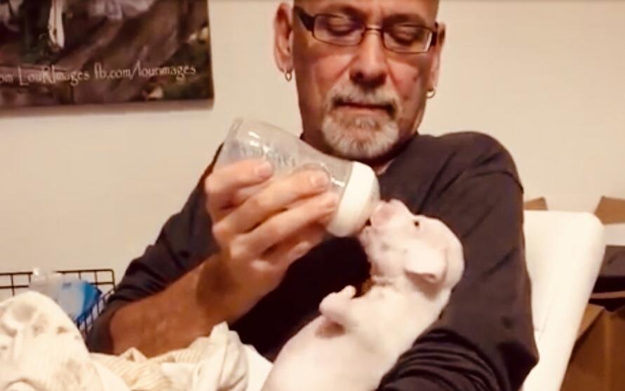 Inspiring Video, Nubby the Two Legged Boxer